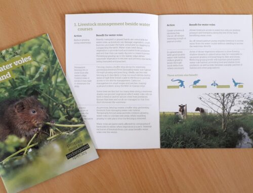 Helping water voles on your land